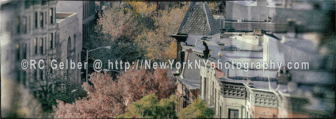 Fall Foliage View Over Brooklyn Brownstone Rooftops, NYC.